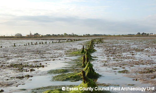 from Blackwater Estuary Fish Traps, Essex